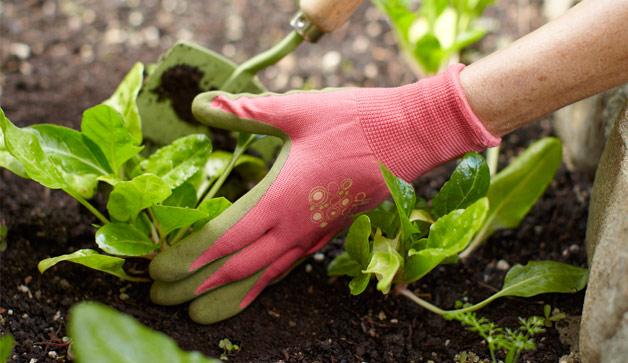 gardening-glove-plant-628x363